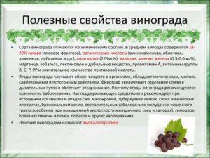 Виноград белый польза и вред для организма человека