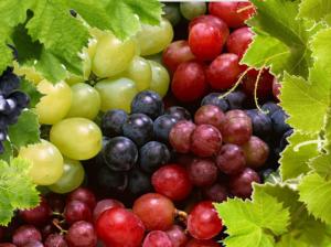 Виноград красный польза и вред для организма