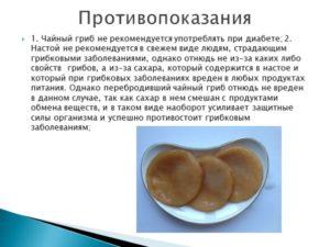 Все о чайном грибе польза и вред