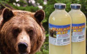 Медвежий жир вред и польза и вред