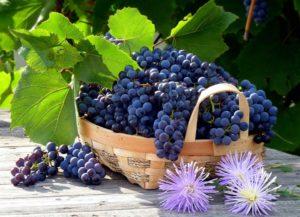 Белый виноград польза и вред лечебные свойства