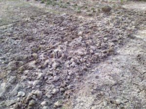 Доломитовая мука польза и вред для растений
