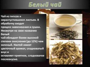 Белый чай что это такое польза и вред