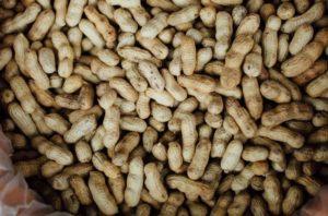 Арахис сырой или жареный польза и вред