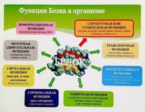 Белок для организма человека польза и вред