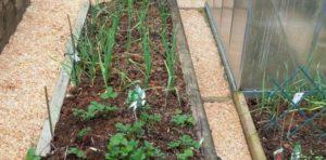 Опилки для огорода польза и вред осенью