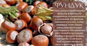 Лесные орехи польза и вред для организма человека