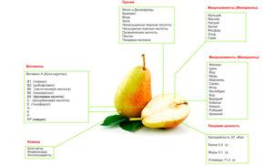 Груша польза и вред для здоровья калорийность