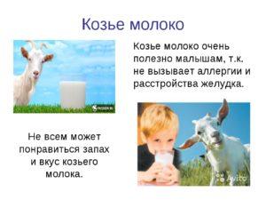 Вред и польза козьего молока для ребенка