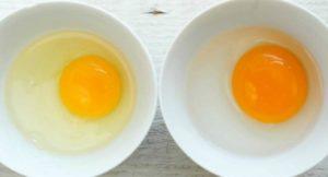 Белок и желток яйца польза и вред