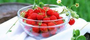 Земляника садовая польза и вред для здоровья