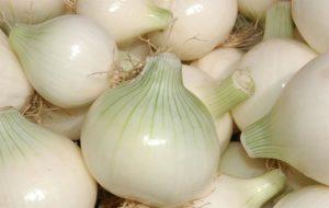 Белый лук польза и вред для организма