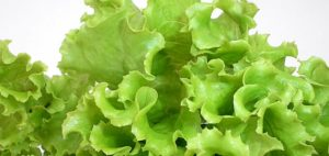Листья салата польза и вред для организма