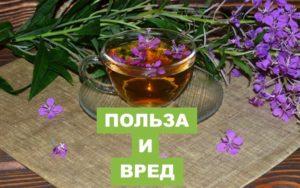 Иван чай с липой польза и вред
