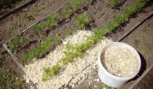 Опилки для огорода польза и вред для картофеля