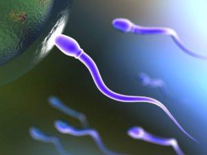 Вред и польза спермы для женщин