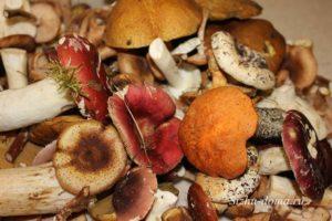 Лесные грибы вред и польза и вред
