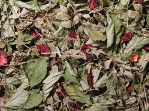 Ферментированный чай из листьев клубники польза и вред