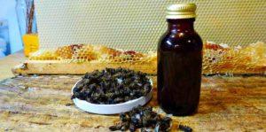Настойка из пчелиного подмора польза и вред