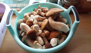 Белый гриб польза и вред для организма