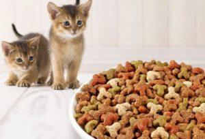 Сухой корм для кошек вред и польза