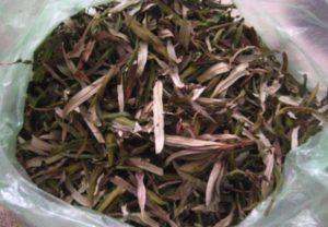Облепиха листья польза и вред передозировка чая