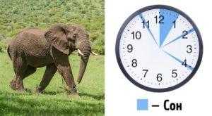 Спать по 5 часов вред и польза