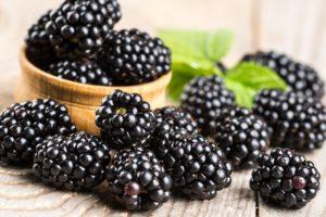 Ежевика садовая польза и вред для здоровья