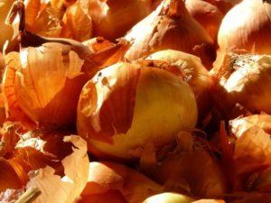 Отвар луковой шелухи польза и вред для полива растений