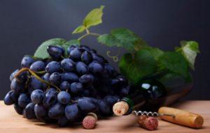 Темный виноград польза и вред для организма