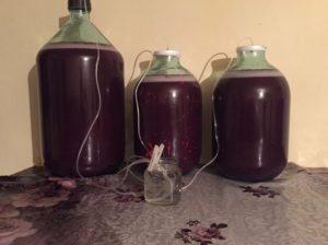 Домашнее вино из винограда вред и польза