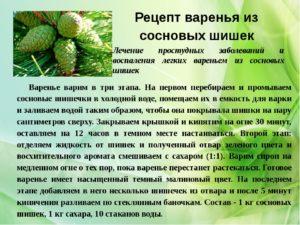 Рецепт из сосновых шишек польза и вред