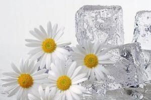 Лед из ромашки для лица польза и вред вокруг глаз
