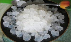 Морской рис вред и польза и вред