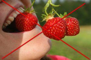 Садовая клубника польза и вред для здоровья