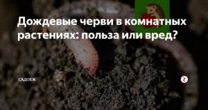 Дождевые черви в комнатных цветах вред или польза