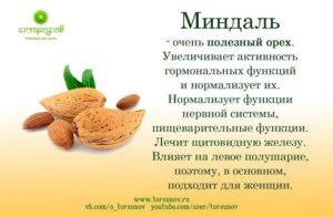 Миндальный орех польза и вред для организма человека