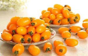 Жареные помидоры польза и вред для организма