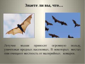 Летучие мыши вред и польза и вред