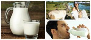 Молоко козье польза и вред в пожилом возрасте