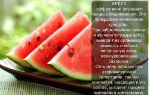Арбуз польза и вред для здоровья человека