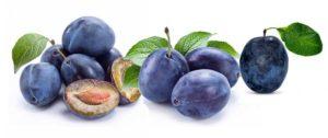 Синяя слива польза и вред для здоровья