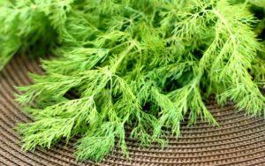 Укроп польза и вред для здоровья семена