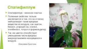 Цветок женское счастье вред и польза