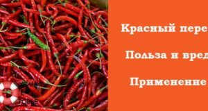 Красный жгучий перец польза и вред для женщин