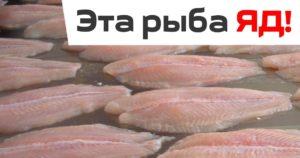 Морской язык польза и вред для организма