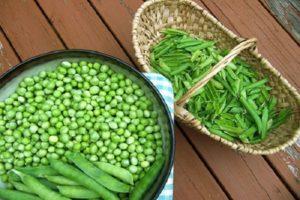 Свежий зеленый горошек польза и вред для здоровья