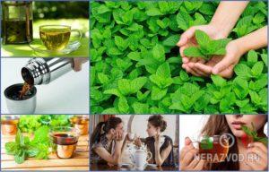 Мятный чай для детей польза и вред