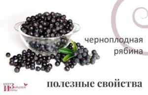 Польза и вред черноплодной рябины для женщин