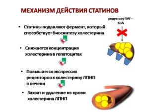 Статины от холестерина польза и вред крестор